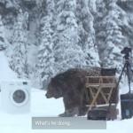クマに襲われるのは笑いの定番?