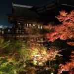 単にライトを付けただけ? それでも盛況な京都清水寺の紅葉ライトアップイベント